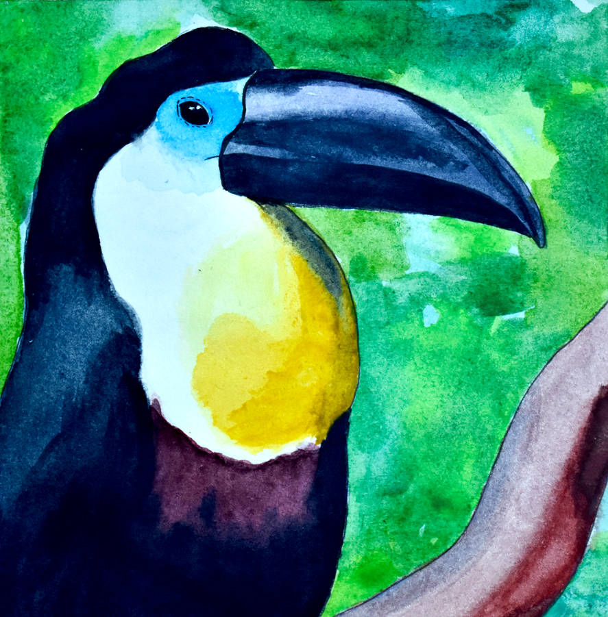 T for Toucan