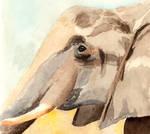 International Elephant Day 2020