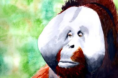 International Orangutan Day 2020