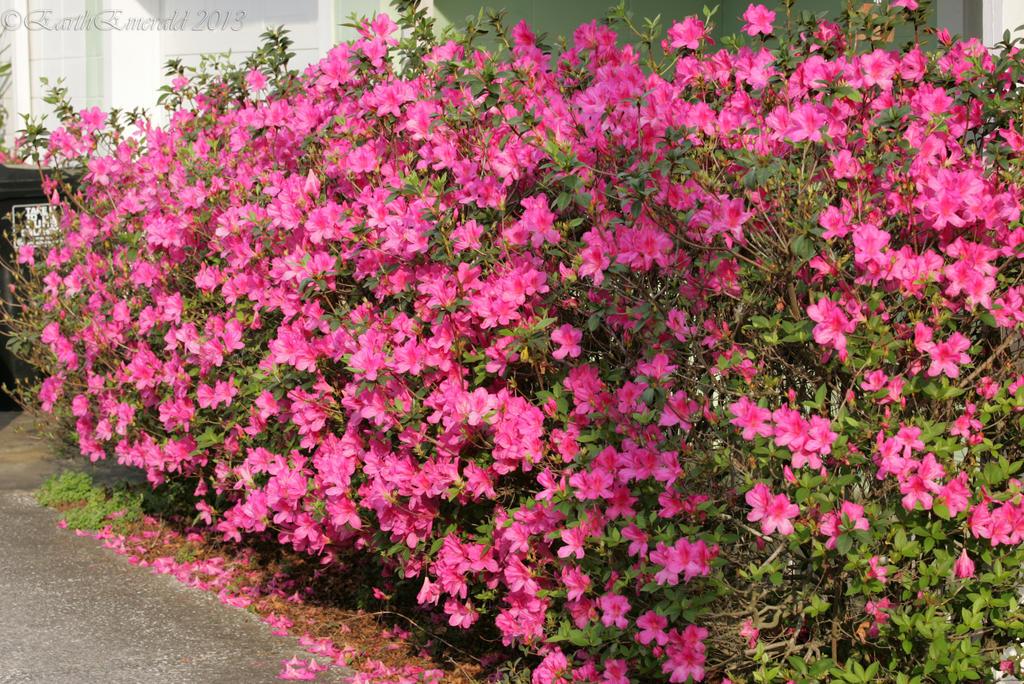 Flower bush by earthemerald on deviantart flower bush by earthemerald mightylinksfo
