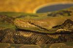 Reticulated Python 3