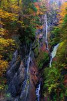 Autumn's Palette by JanPusdrowski
