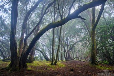 If these Trees could Talk by JanPusdrowski
