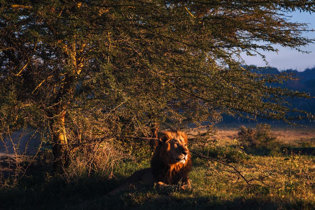 Lion's Mane by JanPusdrowski