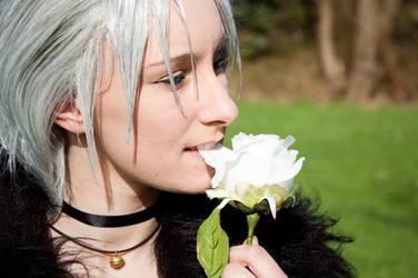 White Rose by Totenbuddler