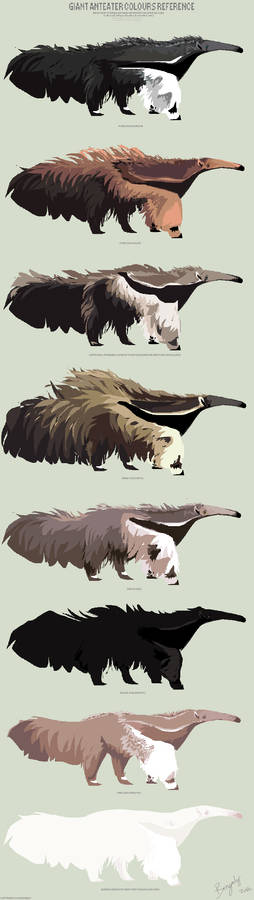 Giant anteater colours