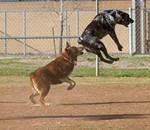 Leap Game