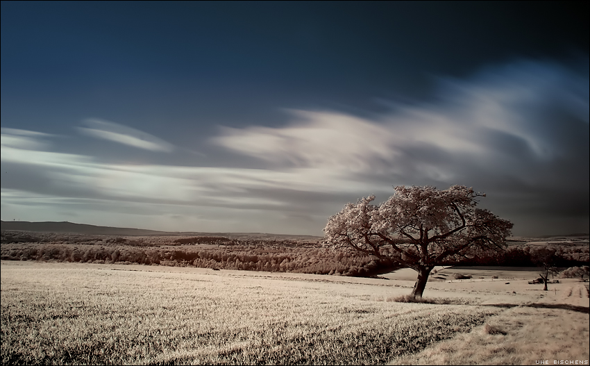 Infrared I by Crossie