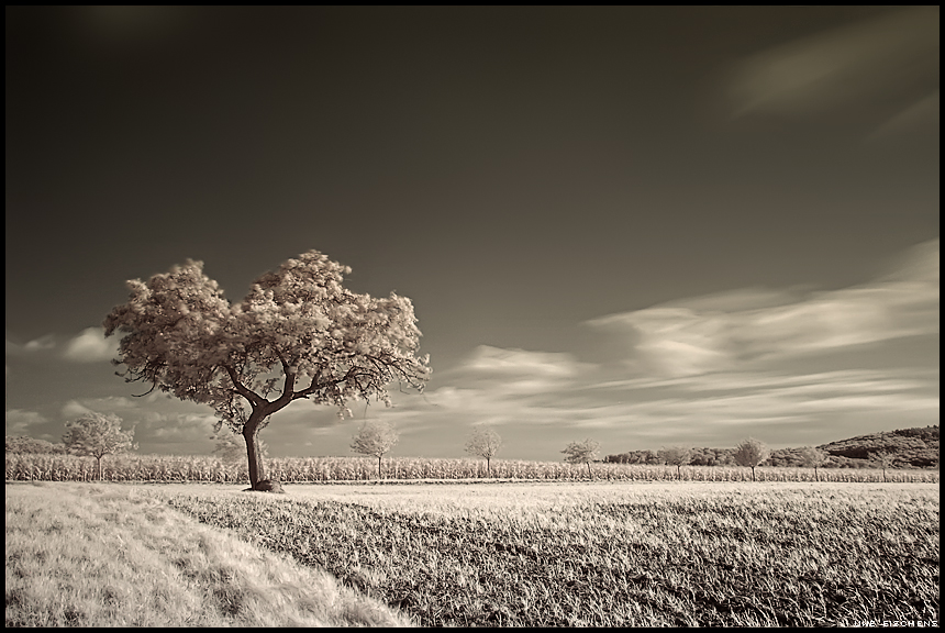 Infrared II by Crossie