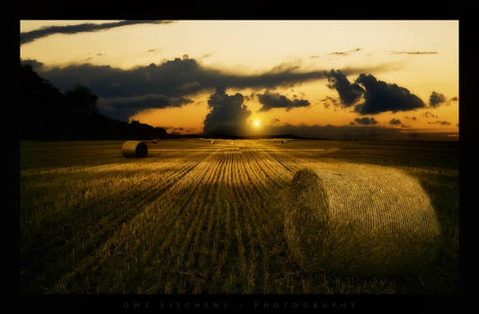 Dawn in the fields