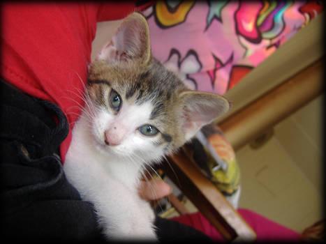 Spots Teh Kitty