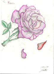 Rose, Falling Petals