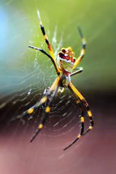 Spider by l--unbound--l