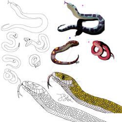 Snake Adoptable Examples