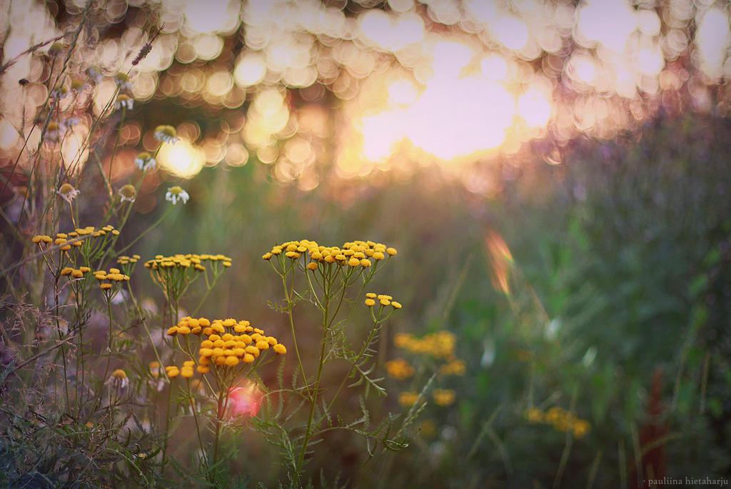 Flowertime 001 by shamandalies