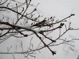 Untitled snow photo 2 by dilandou