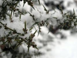 Untitled snow photo 3 by dilandou
