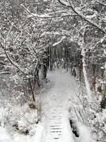 Untitled snow photo 4 by dilandou