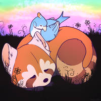 Steven and the Red Panda