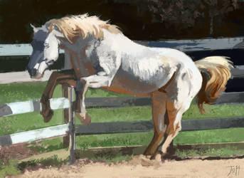 Perlino Stallion v2 by gothicAge
