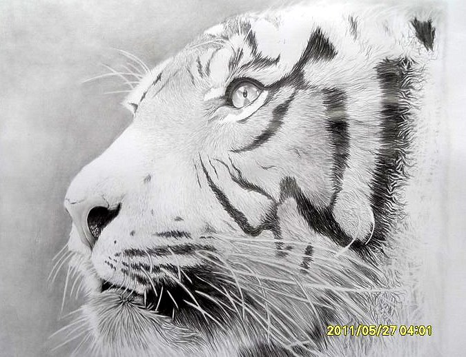 eye of the tigers by BojanBoka