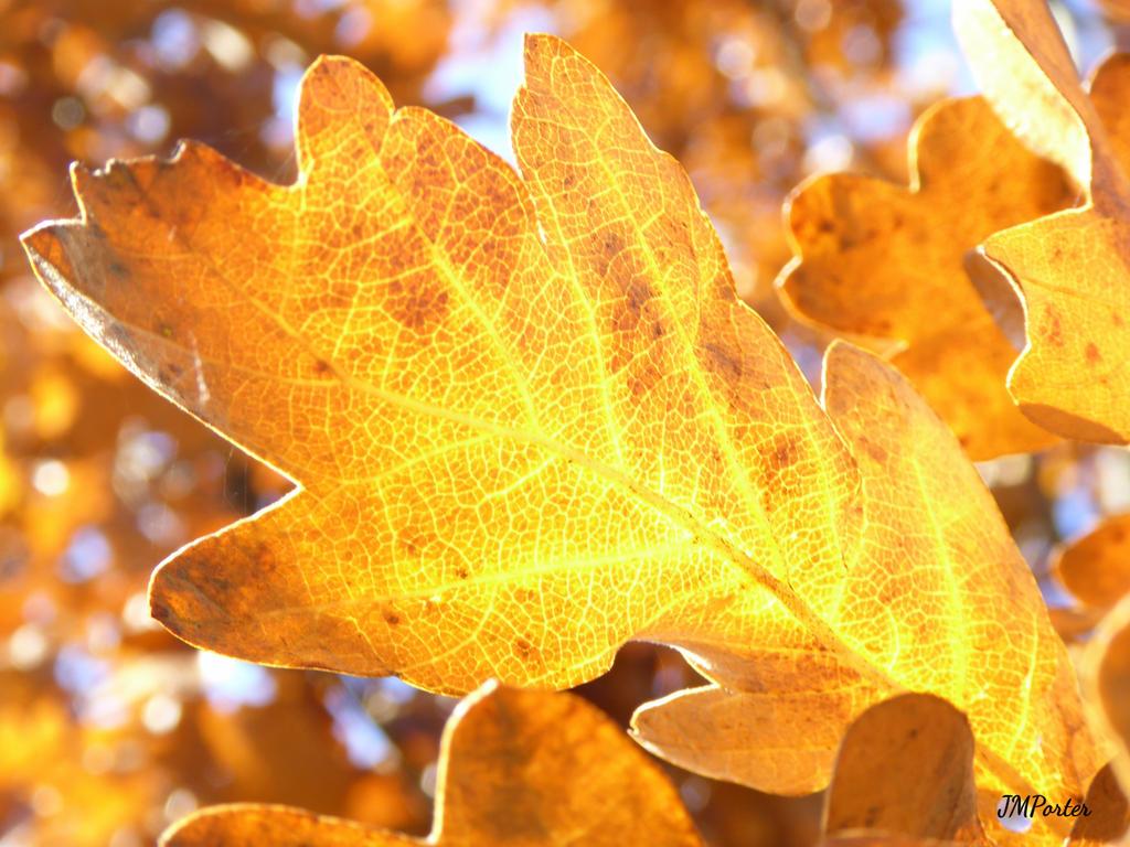 Oak Glow by JMPorter