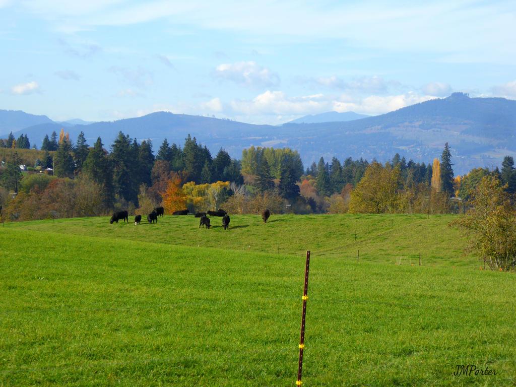 Cattle Ranch by JMPorter