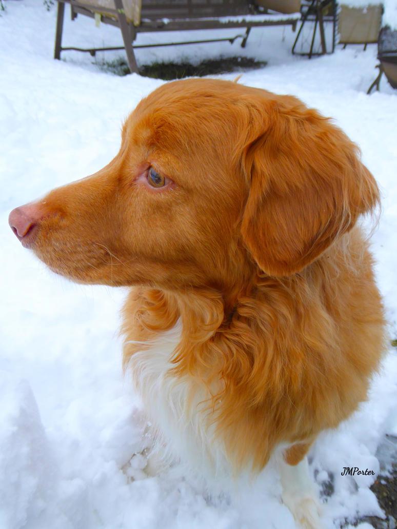 Hawkeye Listening to Snowfall by JMPorter