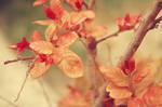 red plant 2 by lorienzeren