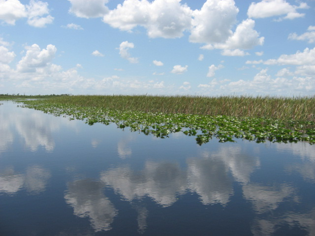 Everglades - Reflection 2 by EnigmaticChaos