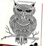 Owl. Drawing in my diary