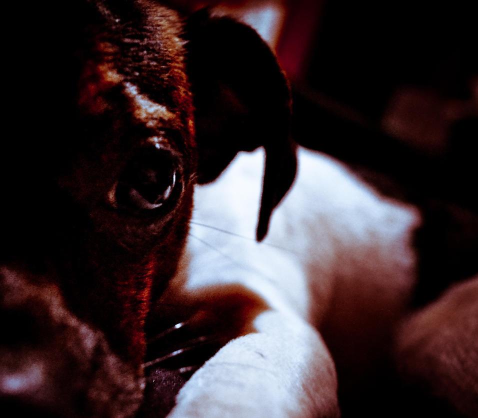Athena: Puppy Dog Eyes by Heavonna