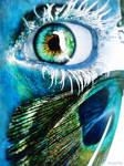 blue eye peacock's paradeyes