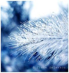 silver dew drops