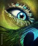 Peacock eye in love