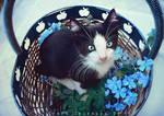 A kitten a day
