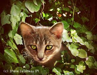 Hunter by ftourini