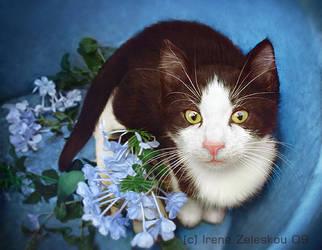 greek cat by ftourini