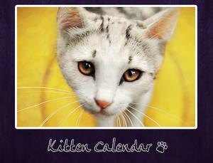 kitten calendar 2013