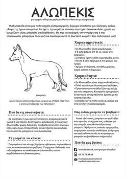 Alopekis -Rare Ancient Greek Dog Breed