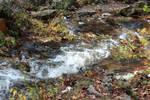 Tiny Rapids