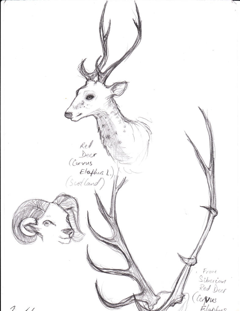deer antlers drawing easy - photo #47