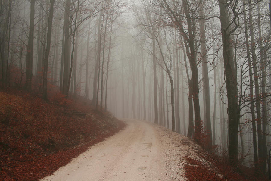 foggy forest by a - photo #29