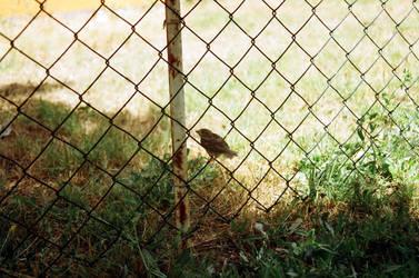 Little Bird by realtolife
