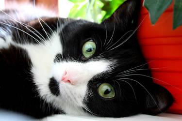 My gf's cat 2 by Diego-Suarez