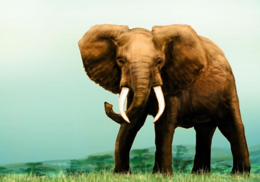 Elefante by Salvaratty
