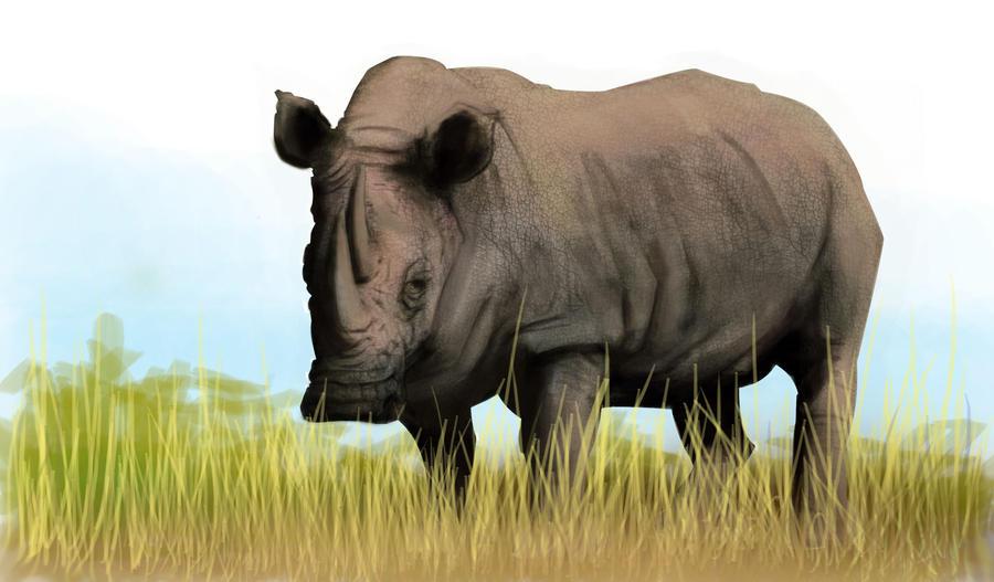 Rhino by Salvaratty