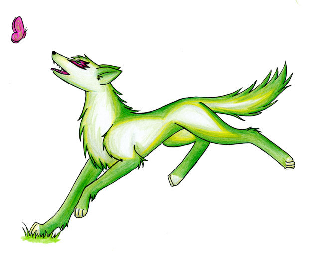 Grass Wolf Images - Reverse Search