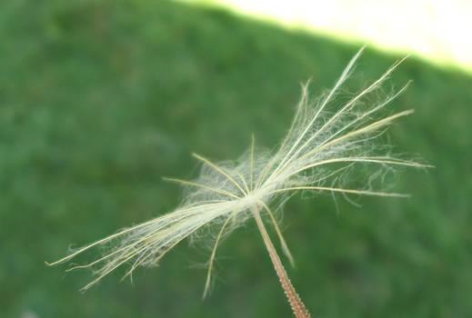 Giant Seed