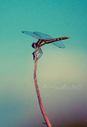 Dragon Fly by mcbadshoes
